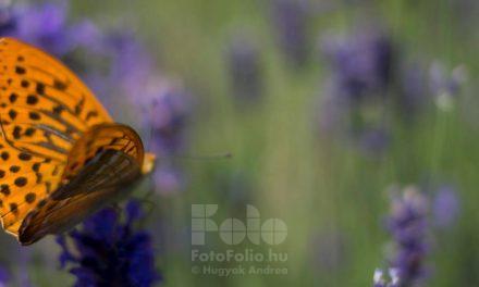 Fotótanfolyam, intenzív online fotós képzés kezdőknek és haladóknak